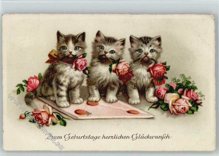 Geburtstag Katzen Ansichtskarten Center Onlineshop