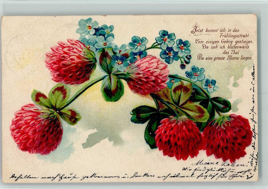 1906 Poesie Vergissmeinnicht Kleeblätter Ak Spruch