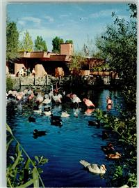 Rapperswil SG Flamingos Enten Gänse Gasthaus im Knies Kinderzoo  Rapperswil-Jona