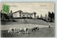 Chaumont 1908 Grand Hotel Kuhherde
