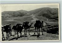 1940 Kamel Road from Jerusalem to Jericho - Karawane AK