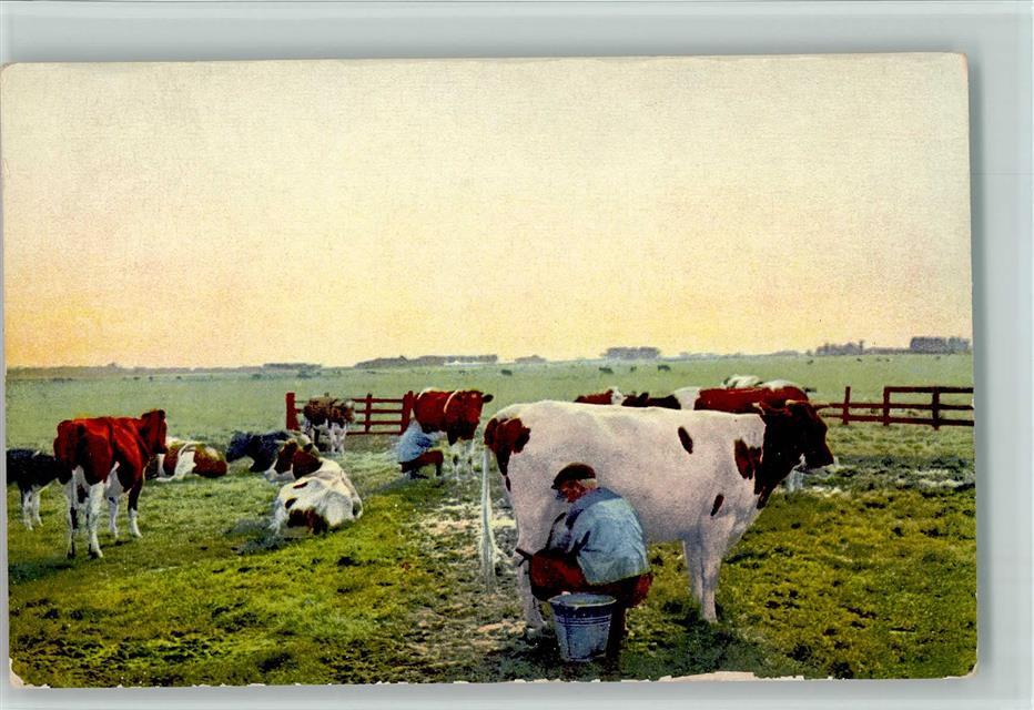 Kuh Kühe - Melker Rückseite Werbung Gemix Schokolade: Ansichtskarten-Center  Onlineshop