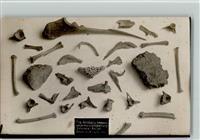 paläontologisches museum berlin