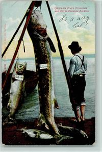 Angeln Riesenfang - Columbia  River Sturgeon and Royal Chinoox Salmon 1908 AK