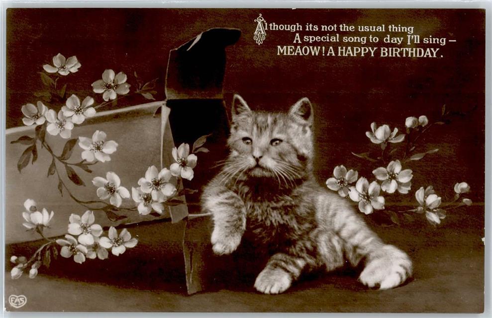 Geburtstag Katze Spruch Ansichtskarten Center Onlineshop