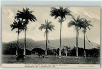 Port of Spain 1911 Palms on Queen`s Park Savannah Trinidad & Tobago