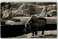 Paris Zoo  Nashorn