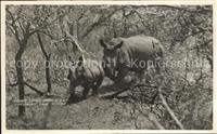 Nashorn Square lipped rhino calf Hluhluwe Fame Reserve  Tiere