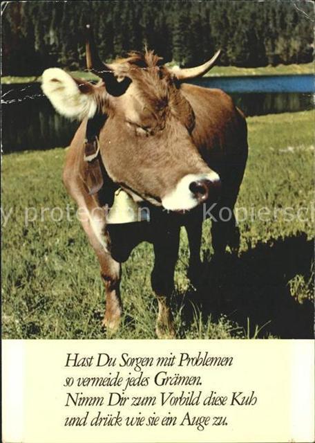 gedichte über tiere