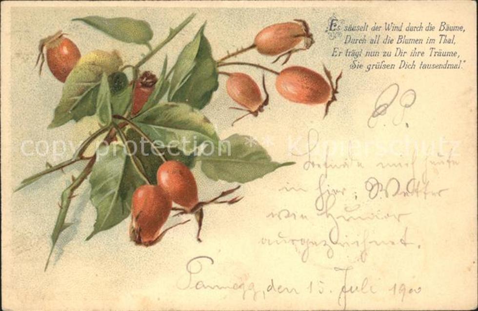 Obst Frucht Hagebutte Gedicht Litho Obst Ansichtskarten