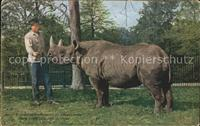 Nashorn African Rhinoceros New York Zoological Park  Tiere