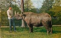 Nashorn Rhinoceros New York Zoological Park  Tiere